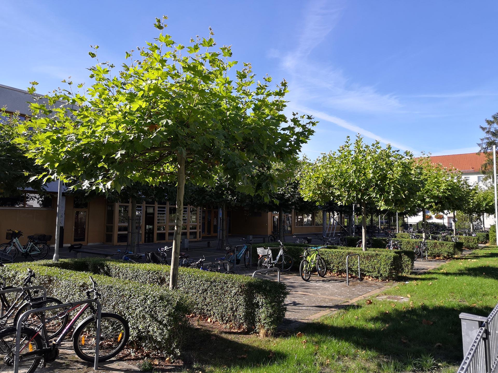 Fahrradständer am Hedwig Bollhagen Gymnasium